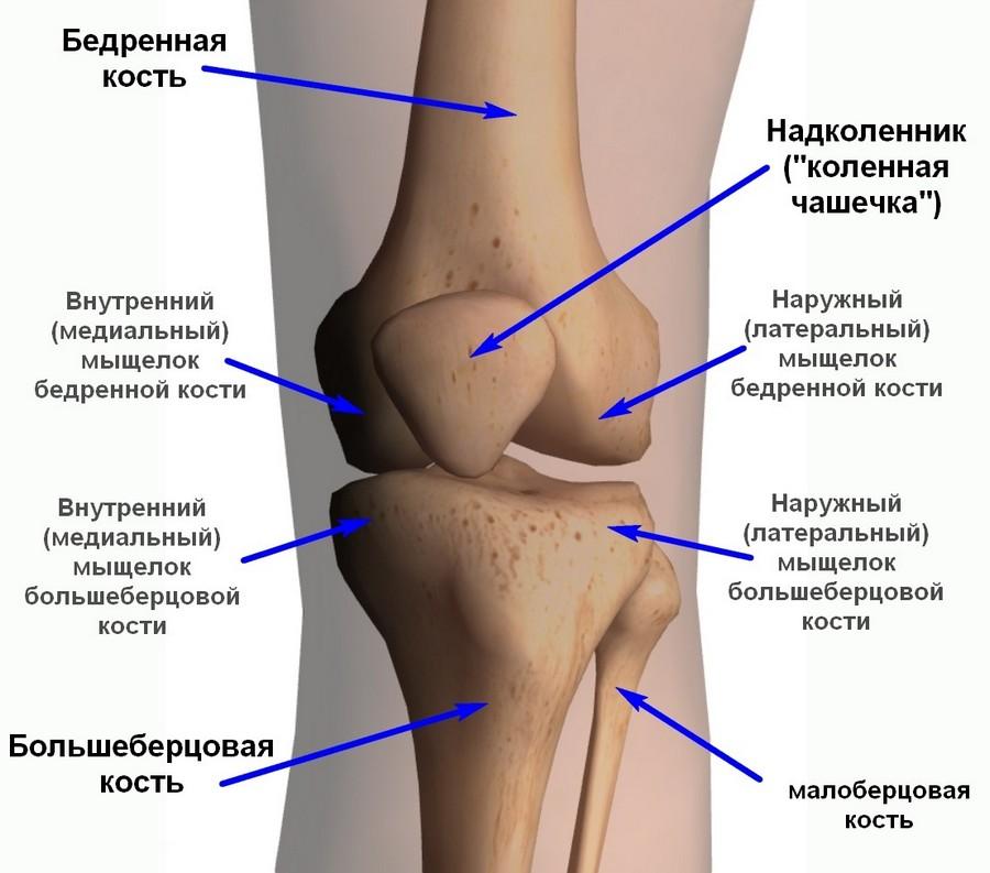 движение коленного сустава